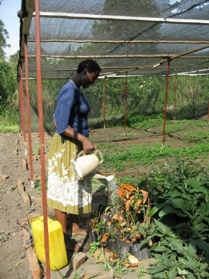 Tooro botanical garden: Er werken zo'n 25 mensen (pr 136 en 143)