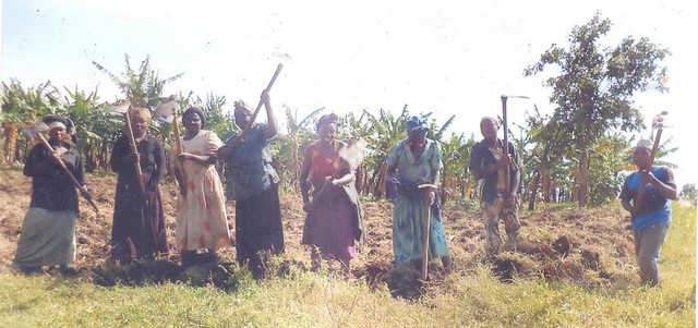 landbouw 1Ngugho Women establish a garden for a member to grow irish Potatoes second phase (2)
